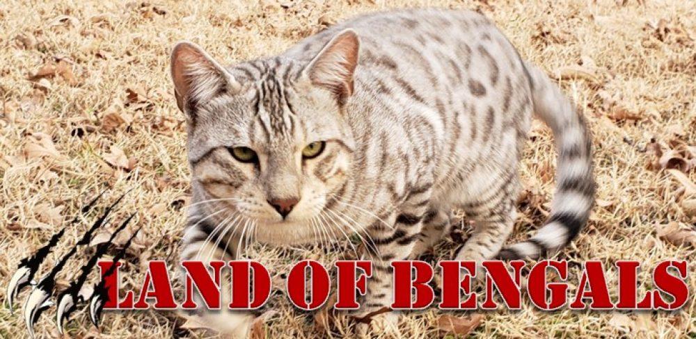 LAND OF BENGALS